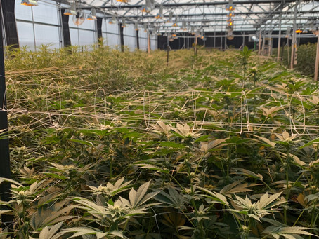 High Performance Commercial Cultivation Facility Questionnaire