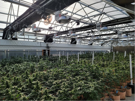 How To Maximize Square Footage In A Marijuana Grow