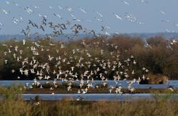 reserve-ornithologique-du-teich