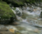 Eco tourism at it best at Mossmon Gorge North Queensland