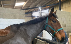 horse in stables.jpg