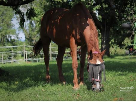 Nouveau site internet dédié aux chevaux de Mivido ENFIN EN LIGNE
