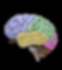 Szkolenie EEG Biofeedback