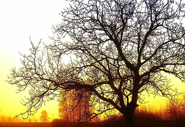 tree-sunrise-light-rays.jpg