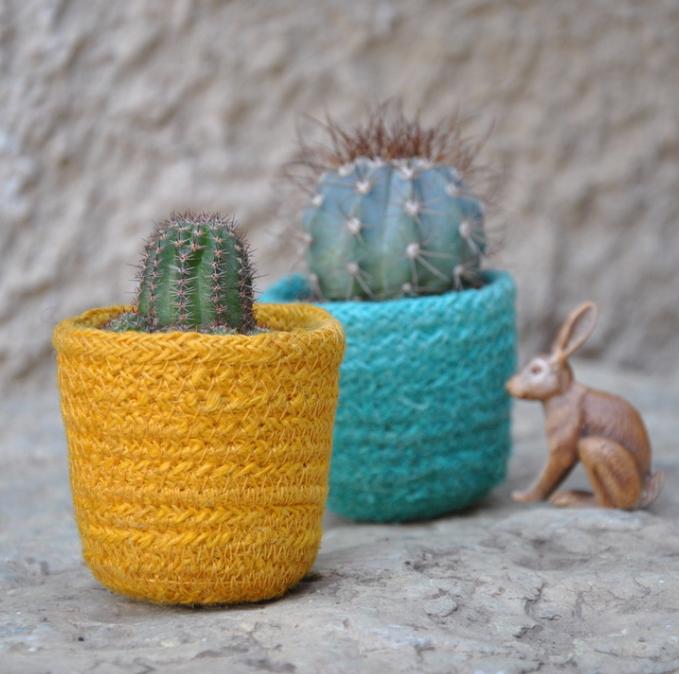 colourfull cactus pots