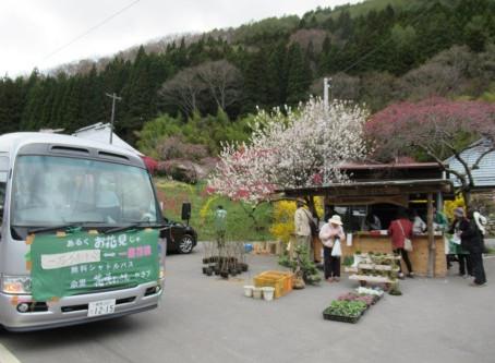 「信州武石余里一里花桃の里」直売所付近の花桃が見頃を迎えています✿