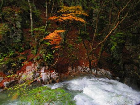 美ヶ原高原から眺める紅葉が、見頃となっています