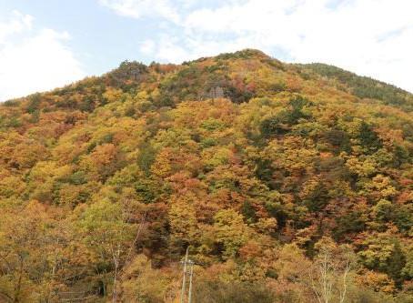 巣栗渓谷の紅葉が、見頃を迎えました