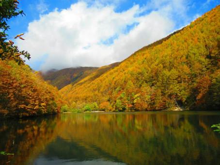 巣栗渓谷の紅葉が週末、いちばんの見頃です!