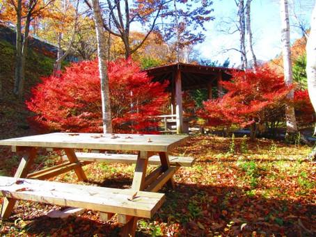 巣栗渓谷・竜ヶ沢ダム周辺の紅葉はまだまだ見頃です!