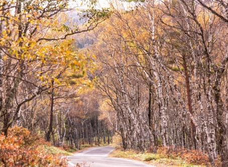 武石地域の紅葉が色づき始め・見頃を迎えています