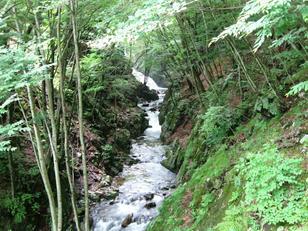新緑の巣栗渓谷