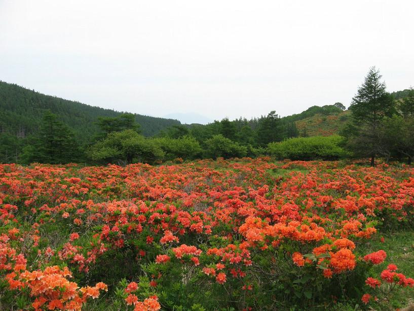 09.6.29焼山牧場付近.jpg