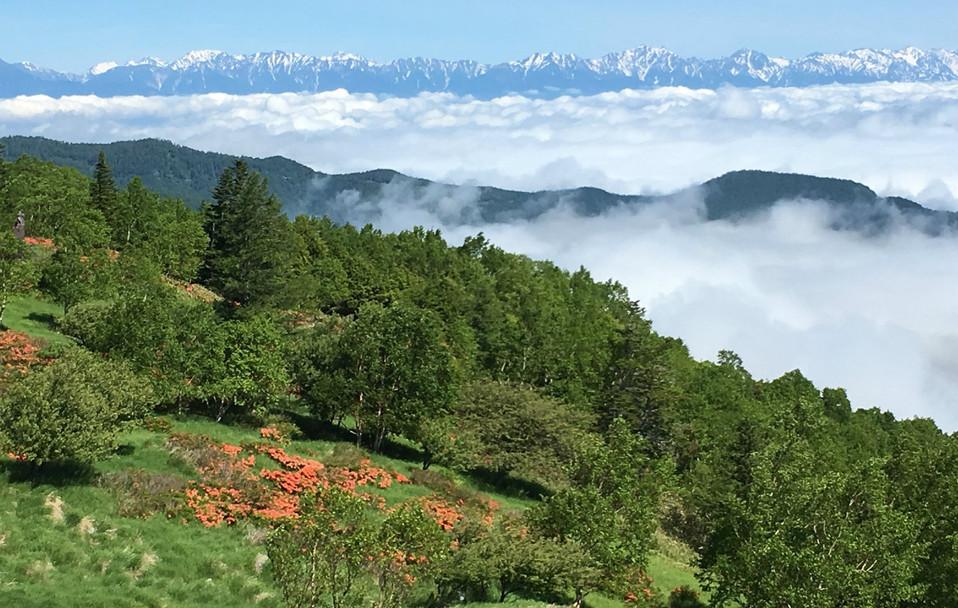 レンゲツツジと雲海と北アルプス.jpg