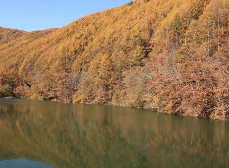 巣栗渓谷の紅葉は、まだ、カラマツは見頃です