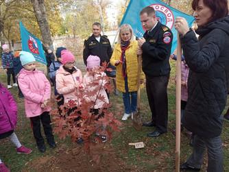 Посадка деревьев в МОУ СШ №1 г.Волжский
