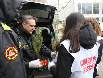 Посадка деревьев в школе №61 г. Волгоград