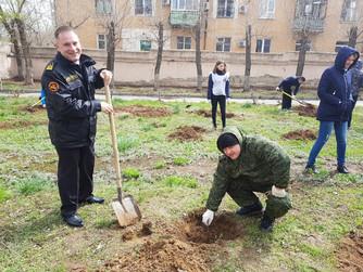 Посадка деревьев в школе №1 г.Волжский