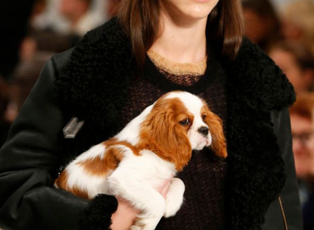 Milan Fashion Week : Models walked the Tod's runway with puppies.