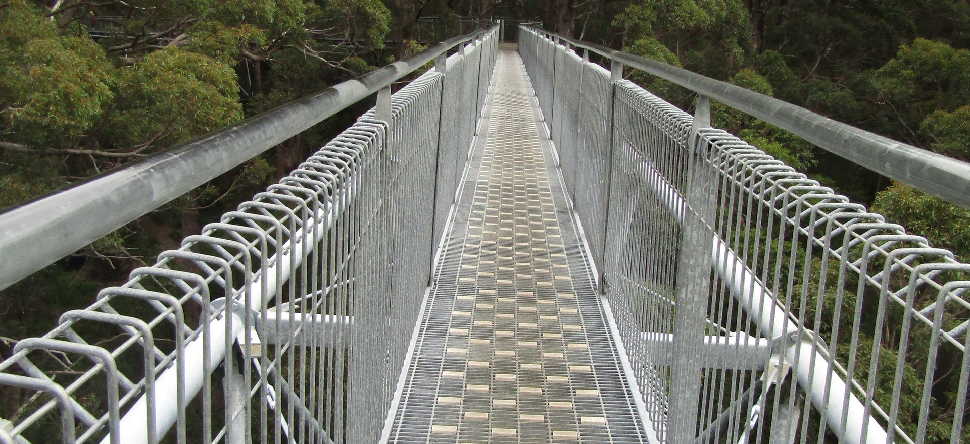 Tree Top Walk Bridge