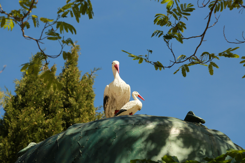 Camping verdoyant en Languedoc (34)
