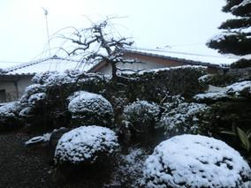 寒波襲来:初冠雪