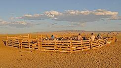 mongolia-2979032__340.jpg