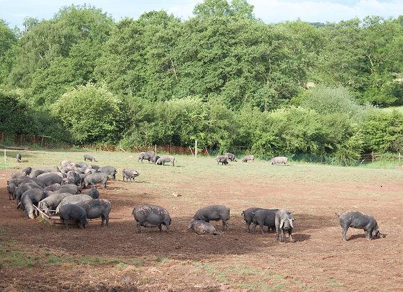 Pork Middle Loin