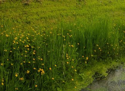 irrigation2_edited_edited.jpg