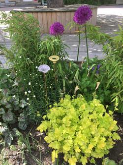 Allium och keramikblommor