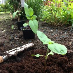 Planteringsdags_170612