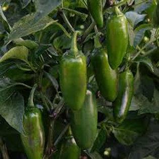 Pepper, La Bomba II Jalapeno