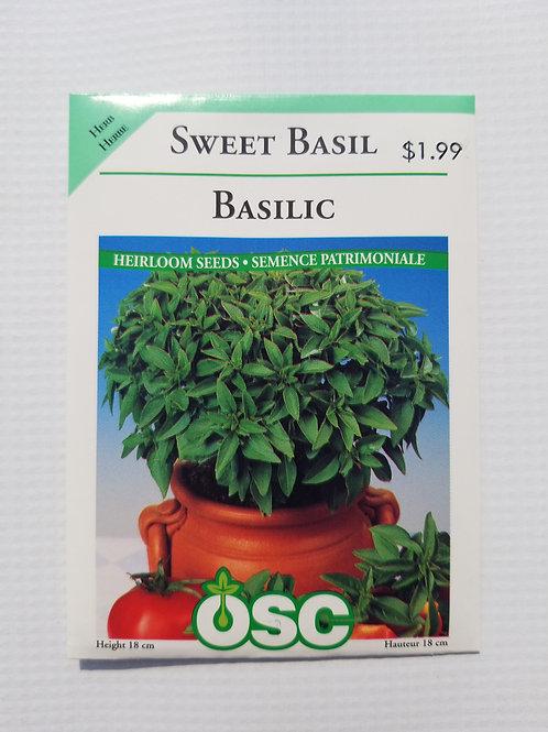 Basil, Sweet