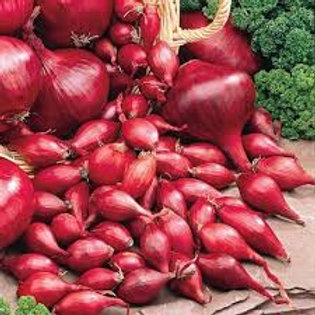 Onion, Red (bag of 100)