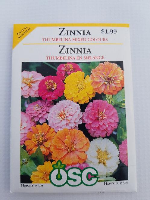 Zinnia, Thumbelina Mixed Colours