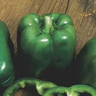 Pepper, Lady Bell Sweet Green