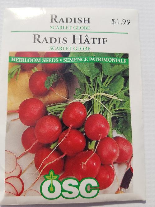 Radish, Scarlet Globe