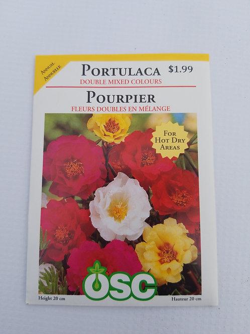 Portulaca, Double Mixed Colours