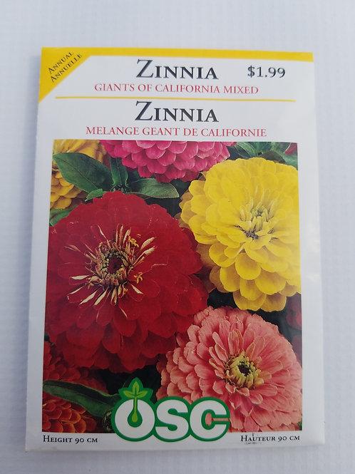Zinnia, Giants of California Mixed