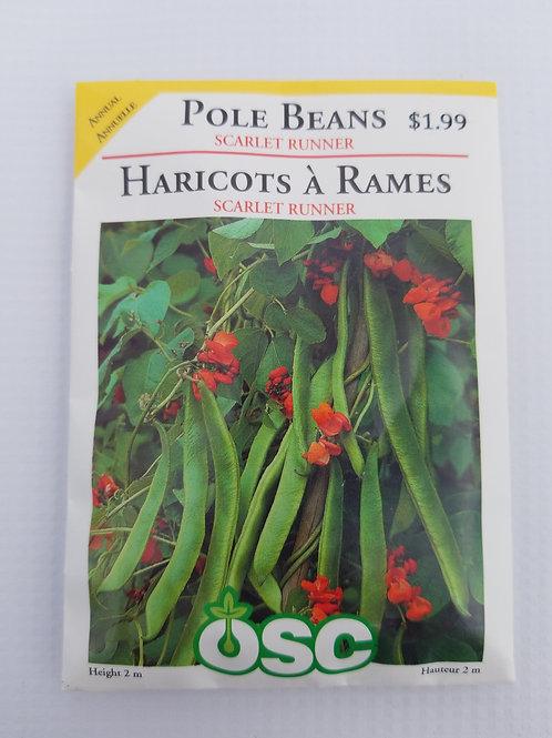 Pole Beans, Scarlet Runner