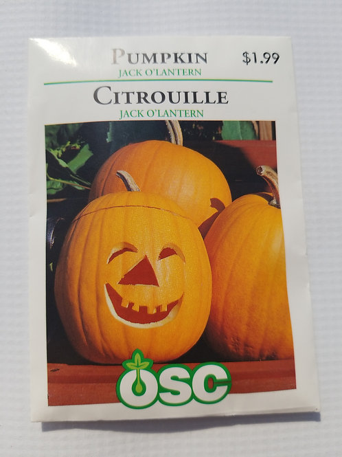 Pumpkin, Jack O'Lantern