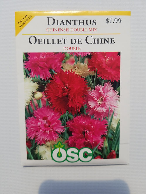 Dianthus, Chinensis Double Mix