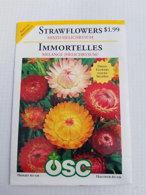 Strawflowers