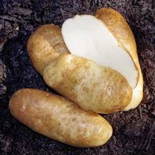 Potato, Russet (seed)