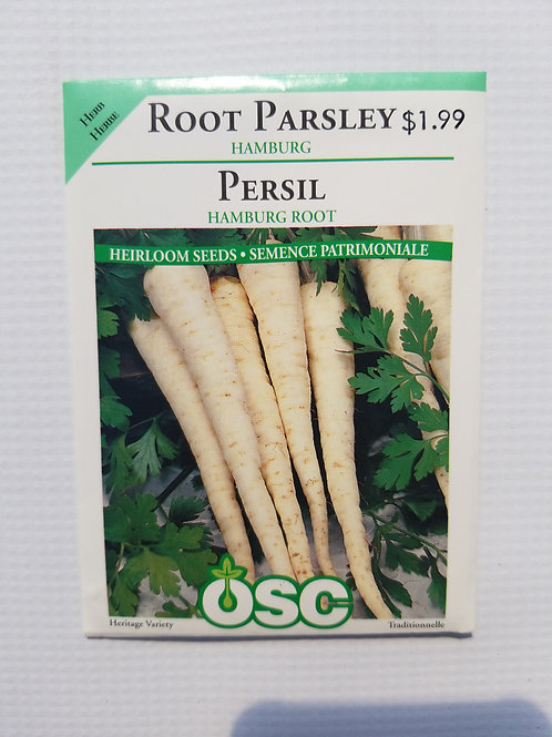 Parsley, Root Hamburg