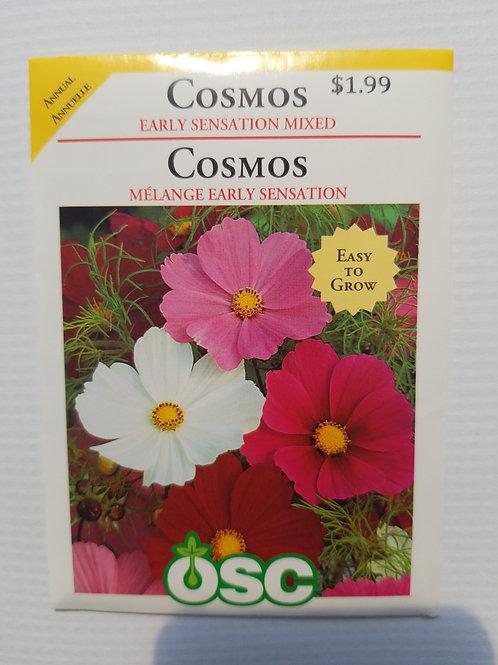 Cosmos, Early Sensation Mixed