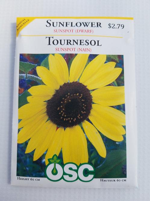 Sunflower, Sunspot (dwarf)