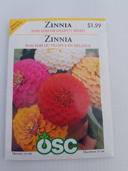 Zinnia, Pom Pom or Lilliput Mixed