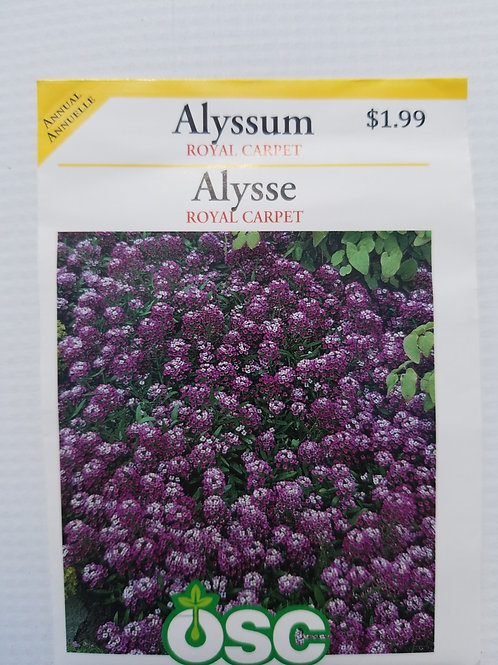 Alyssum, Royal Carpet