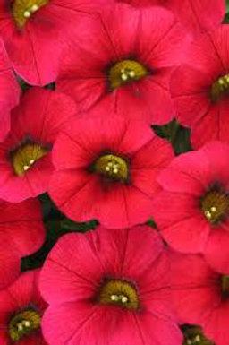 Calibrachoa, Calitastic Red Lips